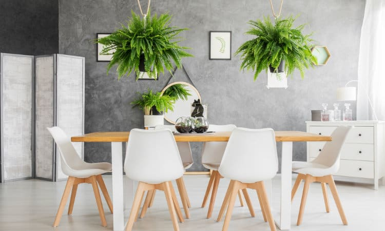 Best Sound Absorbing Indoor Plants